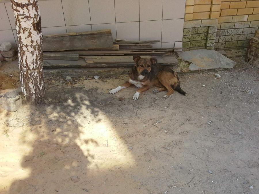 Кузнецк получит  более миллиона рублей на организацию деятельности по обращению с безнадзорными животными