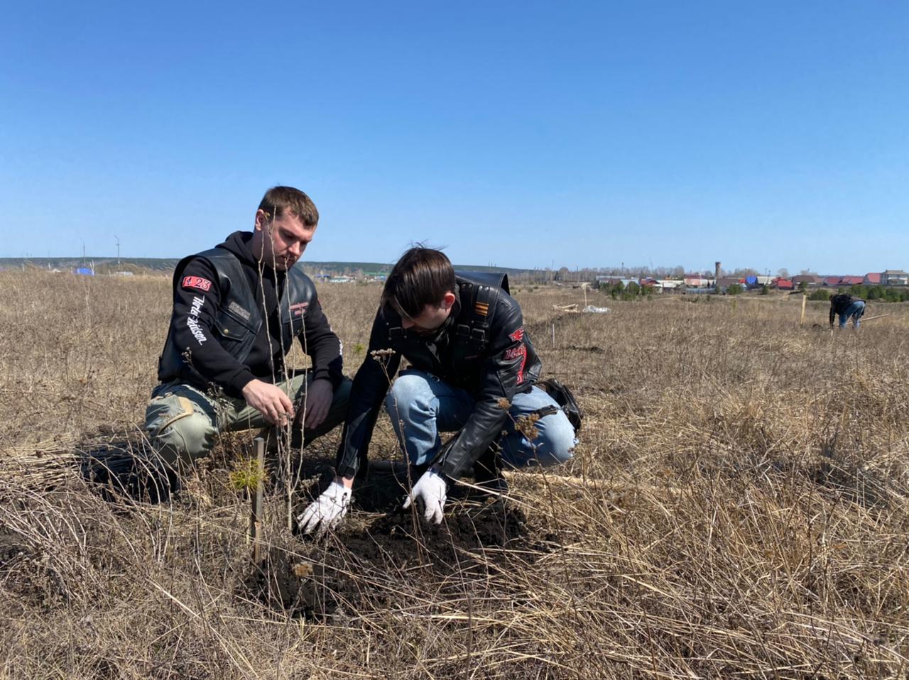 На мотодроме «Сухановский» высажено около двухсот саженцев деревьев