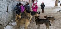 Отловом безнадзорных животных в Кузнецке занимается МКУП «Зеленый город»